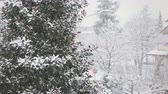venkov : Trees Being Covered by Snow