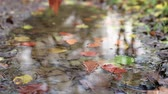 красочный : Leaves falling on a pond in autumn, slow motion view. Close up of leaves as other fall down on the water