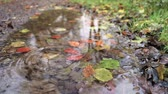 novembro : Little stone falling on a pond in autumn, slow motion view