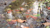 novembro : Leaves falling on a pond in autumn, slow motion view. Close up of leaves as other fall down on the water