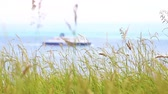топ : Close up view of grass on top of Dover white cliffs on a sunny summer day with a boat passing on the sea on defocused background. Nature and travel concepts. Стоковые видеозаписи