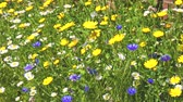 makro : Bees and insects flying on colourful flowers in a garden. Sunny summer day. Nature and animals concepts