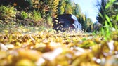 транспорт : Leaves flying as a car passes on the road. Fallen leaves in autumn fly away with wind. Slow motion view of a car on a countryside road. Travel and nature concepts Стоковые видеозаписи