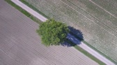 Lone tree aerial view in the countryside between two different cultivations, with green and brown ground. Nature concept with geometric aerial view.