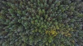 топ : Overhead view of green trees in the forest. Aerial image taken with a drone of firs and larches, conifers trees, creating a pattern for a background. Nature and outdoors concepts