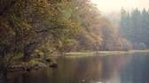 Autumn view of trees and reflection on the water. Misty and moody scene in the Lake District, UK, at peak of fall season with multicolour leaves, mainly orange and yellow. Great as a background Wideo