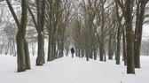 január : Man goes among trees in snowfall