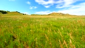 Grassland scenery at Sage Creek Basin of the Badlands National Park - South Dakota Stock Footage