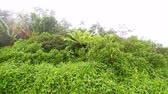 Puerto Rico Foggy Rainforest