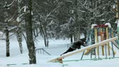 playful : boy up on slide and down winter