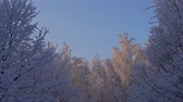 Tree tops covered with frost low angle view Wideo