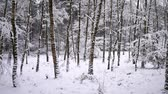 geada : snowflakes on the background of the forest