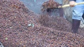 food and drink : make fertilizer from bark coffee bean