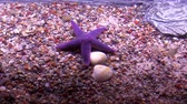 molusco : Starfish on sea floor