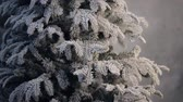 веточка : Artificial fir tree covered with frost without ornament stand indoor.