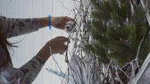little : The female designer decorates the natural Cristmas tree with balls and stars in the studio. The spruce is shaped with white and silver beautiful branches. The lady wears gray blouse and blue bangle on the left hand. Stock Footage