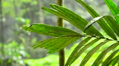 tropical climate : Droplet water during raining in the tropical forest with out of focus effect