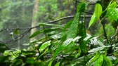 kempování : closeup footage, rain droplets to a leaves in a tropical rain forest Dostupné videozáznamy
