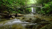 çevre : Close up footage,river rapids flowing through mossy rock and surrounding by tropical rain forest