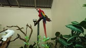 macaw parrot : White and Beautiful Red Parrot Scarlet Macaw bird perched on metal stand