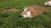 memeli : Adorable fluffy bunny rabbits in backyard