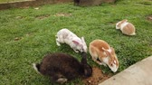 veterinair : Adorable fluffy bunny rabbits in backyard