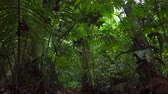 luxuriante : Beautiful nature of tropical green rainforest in lush Vídeos