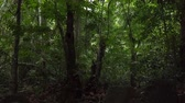 explorar : Beautiful tropical green forest nature in lush Vídeos