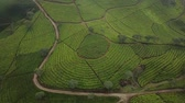 Stunning aerial scenery footage of tea plantations from a drone moving forward in Bandung regency, West Java, Indonesia. Shot in 4k resolution