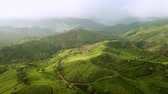 Amazing aerial view footage of tropical tea plantations from a drone moving forward in Bandung regency, West Java, Indonesia. Shot in 4k resolution Vidéos Libres De Droits