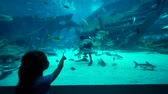Singapore. December 05, 2017: Little girl looking at a diver feeds fish in S.E.A. Aquarium at Marine Life Park, Singapore