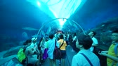 Singapore. December 05, 2017: Video footage of crowded people inside S.E.A. Aquarium at Marine Life Park, Singapore