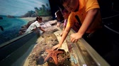 Singapore. December 05, 2017: Video footage of a group of children touching starfish in S.E.A. Aquarium at marine Life Park, Singapore