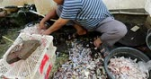 kurbağa : JAKARTA - Indonesia. March 28, 2018: Man washing the killed frogs for cooking in local market at Chinatown of Glodok, Jakarta, Indonesia. Shot in 4k resolution