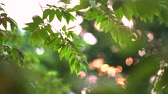 пышный : Video footage of tropical green leaves and branch with selective focus. Shot during spring time