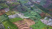 irrigation system : Beautiful aerial view of lush farmlands at Dieng highland in Central Java, Indonesia. Shot in 4k resolution Stock Footage