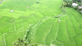 오두막 : Exotic aerial landscape of green paddy field. Shot in 4k resolution from a drone flying to left