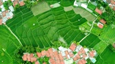 Top down view of green rice field and village houses. Shot in 4k resolution from a drone flying by spinning