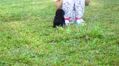 ismeretlen : Black little puppy playing with his owner while running on the grass at the park. Shot in 4k resolution