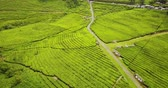 Beautiful aerial view of green tea plantation and highway from a drone flying upward at Subang highland, West Java - Indonesia. Shot in 4K resolution