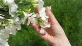 sensorial : Woman holding white beautiful flower in hand. Female hand touching blossoming tree in slow motion on sunny summer day
