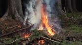 queimado : Burning spruce branches and rising smoke. Cleaning the forest.