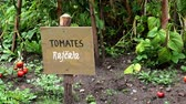 tomates : Inscription in Spanish and Czech on wooden board in the garden. Information sign and inscription tomatoes (tomates). Vegetable garden.