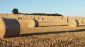 palheiro : Hay bales on the field after harvest. Agricultural field. Hay bales in golden field landscape.