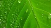 drop : Water-drops on leaf surface