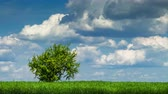 herb : Timelapse of green tree growing alone in green field. Beautiful summer landscape.