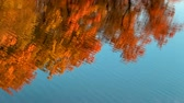 мирный : Water surface with ripples and reflections of autumn trees. Стоковые видеозаписи