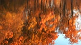 ahornbaum : Water surface with ripples and reflections of autumn trees. Stock Footage