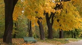 ahornbaum : Maples and benches in the autumn city park Stock Footage