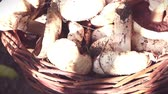 mushroom growing : mushrooms in a wicker basket, closeup, mushrooms collect concept.